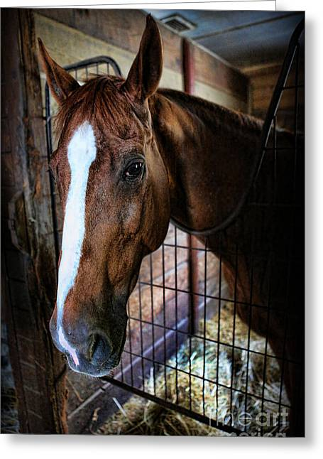 Quarter Horse Greeting Cards - Horse in a Box Stall - Horse Stable Greeting Card by Lee Dos Santos