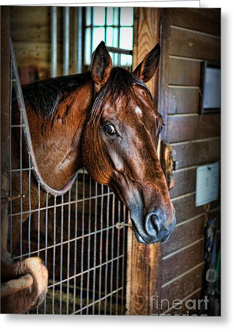 Quarter Horse Greeting Cards - Horse in a Box Stall II - Horse Stable Greeting Card by Lee Dos Santos