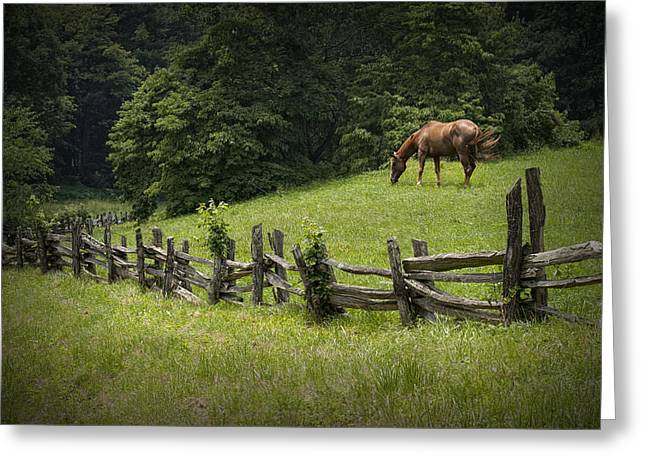 Hooved Mammal Greeting Cards - Horse in a Pasture along the Blue Ridge Parkway Greeting Card by Randall Nyhof