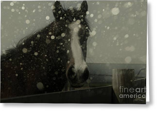 Caballo. Fence Greeting Cards - Horse In Falling Snow Greeting Card by J M Lister