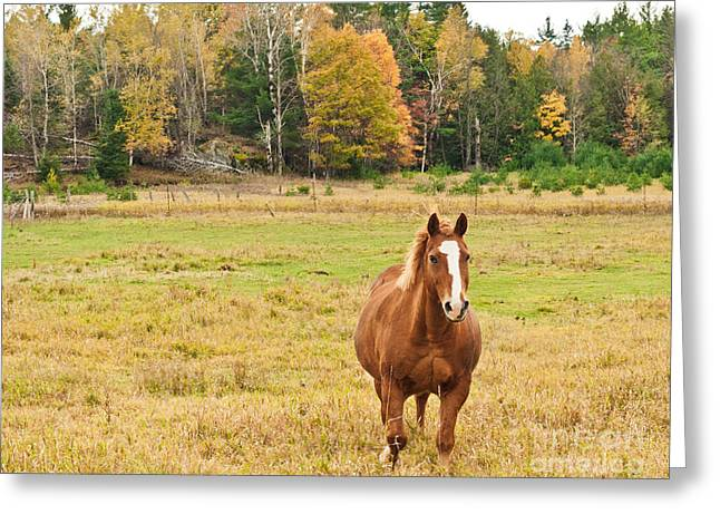 Fall Scenes Greeting Cards - Horse in Field-Fall Greeting Card by Cheryl Baxter