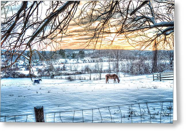 Snowy Day Greeting Cards - Horse in Filed of Snow at Sunset Greeting Card by John Franco