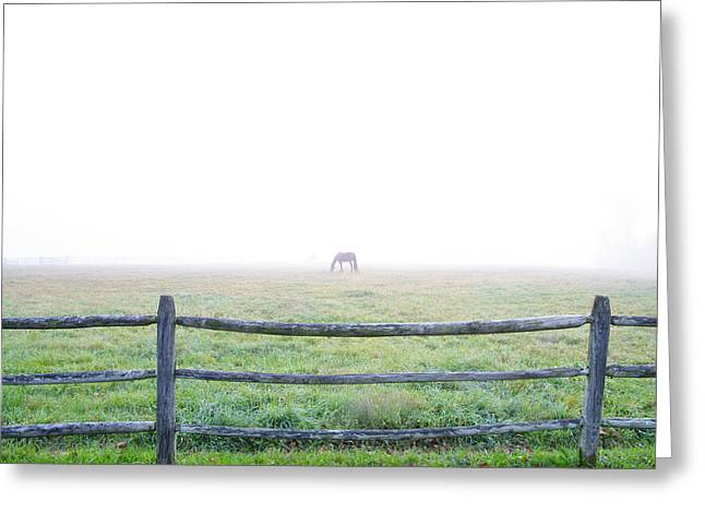 Horse In Field Greeting Cards - Horse in Foggy Field Greeting Card by Bill Cannon
