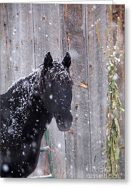 Wintery Barn Greeting Cards - Horse In Snow Greeting Card by William Munoz