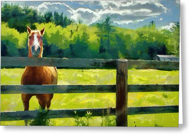 Fence Greeting Cards - Horse in the Field Greeting Card by Jeff Kolker