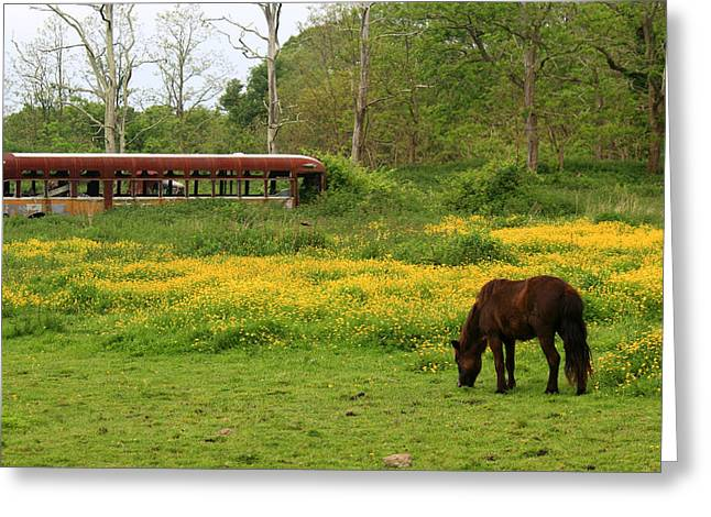 Andrew Pacheco Greeting Cards - Horse in the Meadow near Weetamoo Greeting Card by Andrew Pacheco