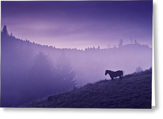 Purple Greeting Cards - Horse in the mist Greeting Card by Yuri Santin