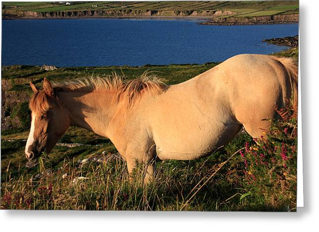Brown Horse Photographs Greeting Cards - Horse In Wildflower Landscape Greeting Card by Aidan Moran
