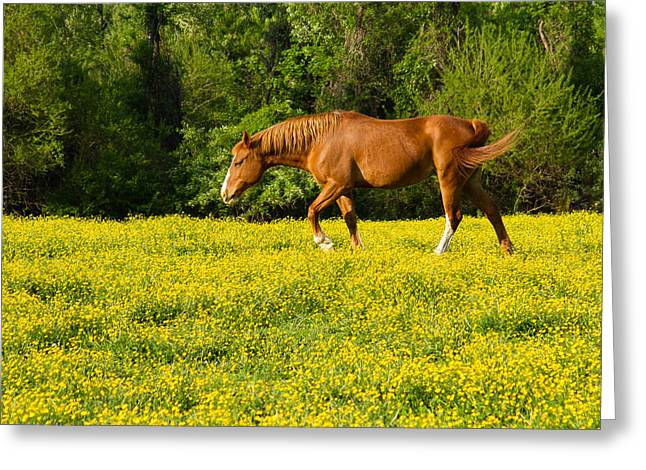 Race Horse Greeting Cards - Horse in Yellow Flowers Greeting Card by Earl Ball