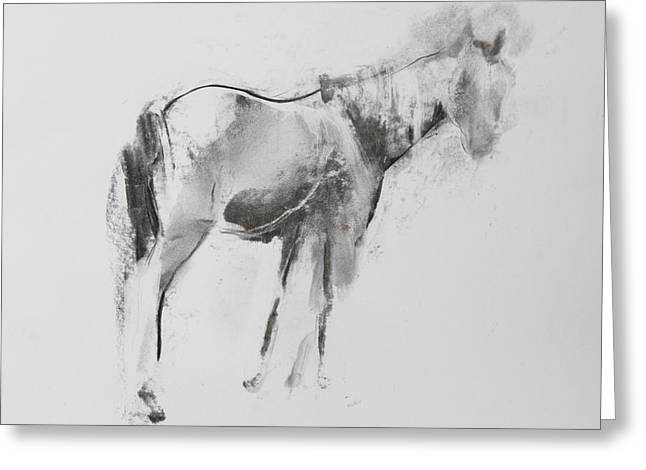White Tail Pastels Greeting Cards - Horse Greeting Card by Janet Goddard