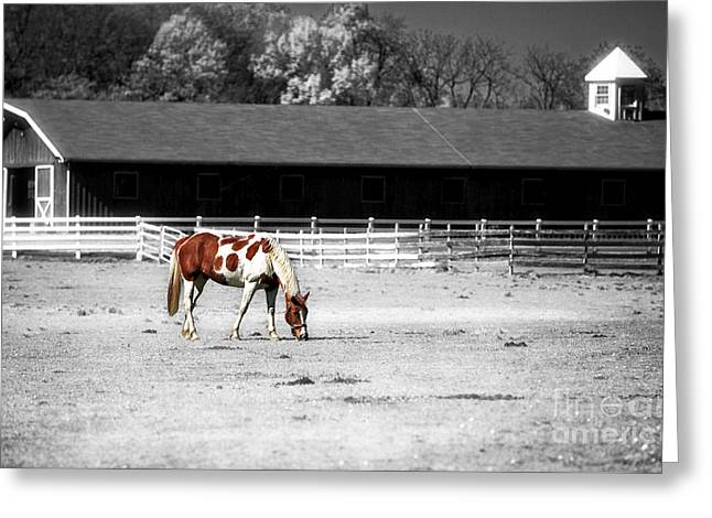 Monotone Color Greeting Cards - Horse Greeting Card by John Rizzuto