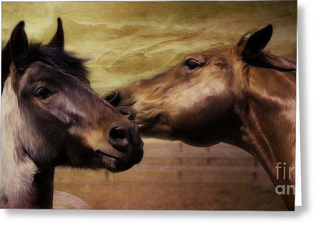 Old Western Photos Greeting Cards - Horse Kisses 2 Greeting Card by Jacque The Muse