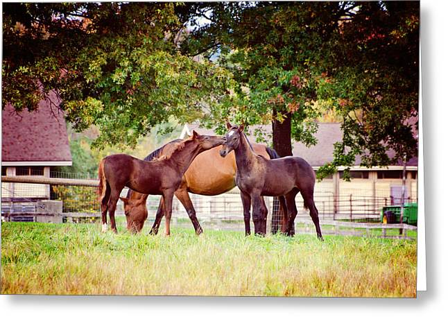 Umass Greeting Cards - Horse Kisses Greeting Card by Donna Doherty