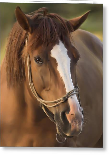 Quarter Horse Mixed Media Greeting Cards - Horse Greeting Card by Linda Muir