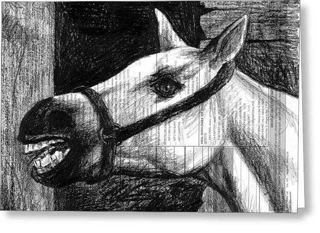 Whites Drawings Greeting Cards - Horse Greeting Card by Mark Zelmer