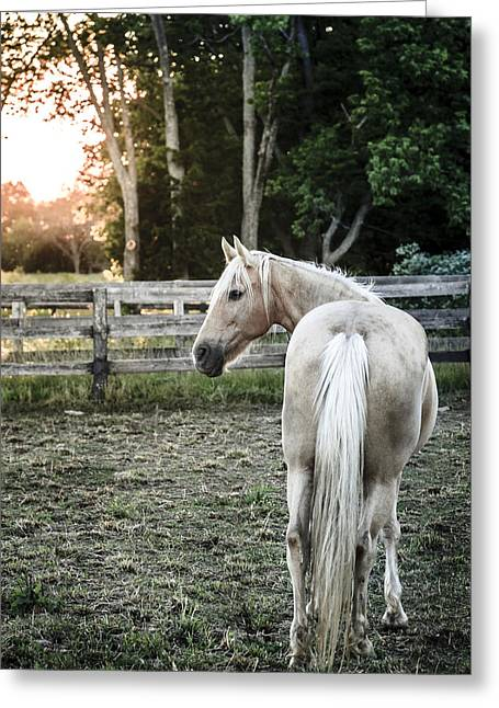 Bluegrass Greeting Cards - Horse of a farm Greeting Card by Alexey Stiop