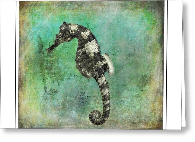 Original Photographs Greeting Cards - Horse of the Sea Greeting Card by Barbara Chichester