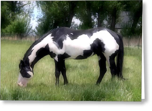 Tiger Economy Greeting Cards - Horse on a summer pasture Greeting Card by Lanjee Chee
