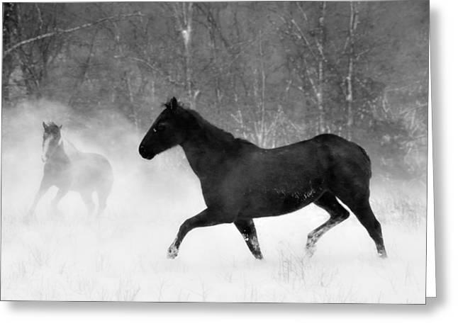 Quarter Horse Greeting Cards - Horse Play Greeting Card by Leslie Heemsbergen