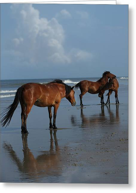 Shadow Horse Studios Greeting Cards - Horse Play Greeting Card by Lyndsey Warren