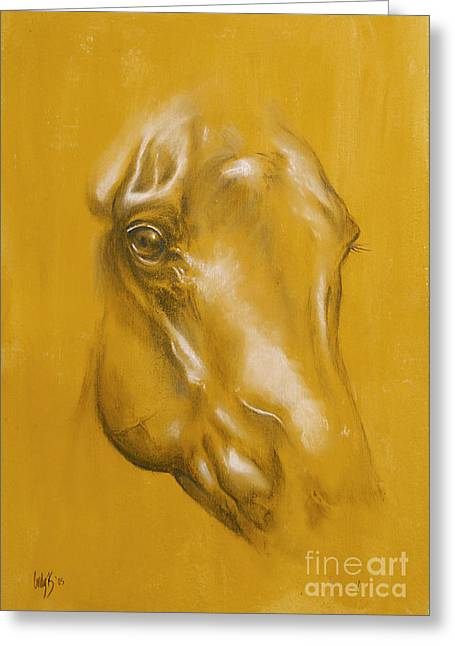 Beauty Pastels Greeting Cards - Horse portrait Greeting Card by Tamer and Cindy Elsharouni