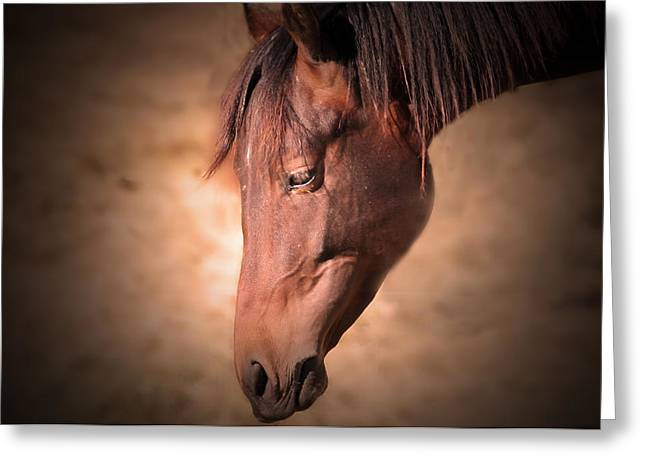 Maine Agriculture Greeting Cards - Horse Portrait Greeting Card by Patricia McAtee