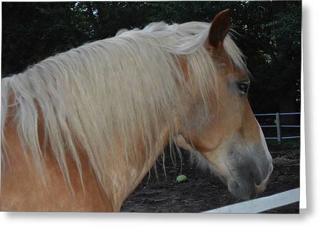 Cim Paddock Greeting Cards - Horse Profile Greeting Card by Cim Paddock