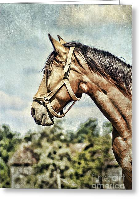 Ranch Digital Art Greeting Cards - Horse Profile Greeting Card by Darren Fisher