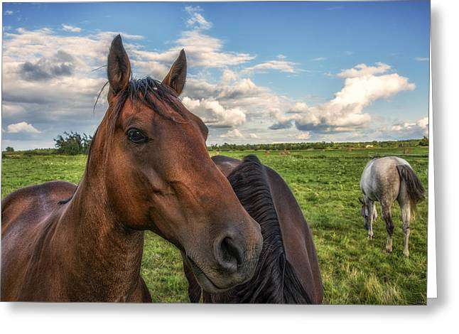 Quarter Horse Greeting Cards - Horse Profile Greeting Card by Mark Papke