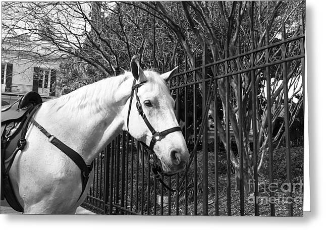Horse Profile Mono Greeting Card by John Rizzuto
