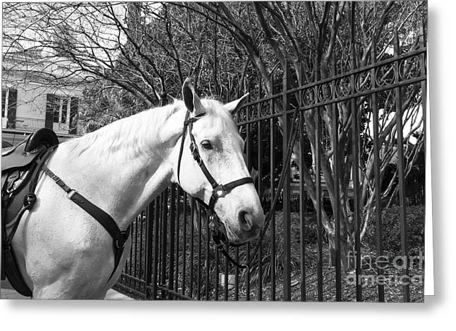 Horse Images Greeting Cards - Horse Profile mono Greeting Card by John Rizzuto