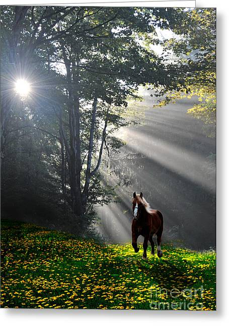 Horse Running In Dandelion Field With Streaming Sunlight Greeting Card by Dan Friend