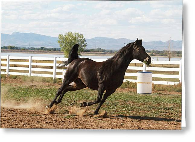 Horse Running In Pasture Greeting Card by Piperanne Worcester