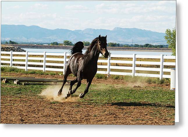 Horse Running Greeting Card by Piperanne Worcester