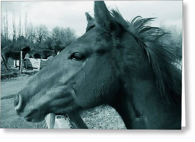 Thought Wild Greeting Cards - Horse Sense Greeting Card by Steven Milner