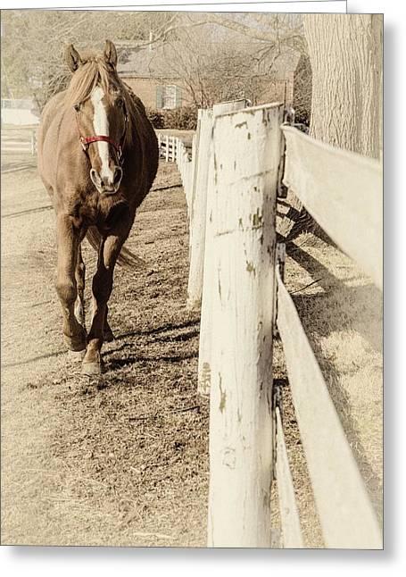Pamela Parton Photography Greeting Cards - Horse Sepia Tint Greeting Card by Pamela Parton