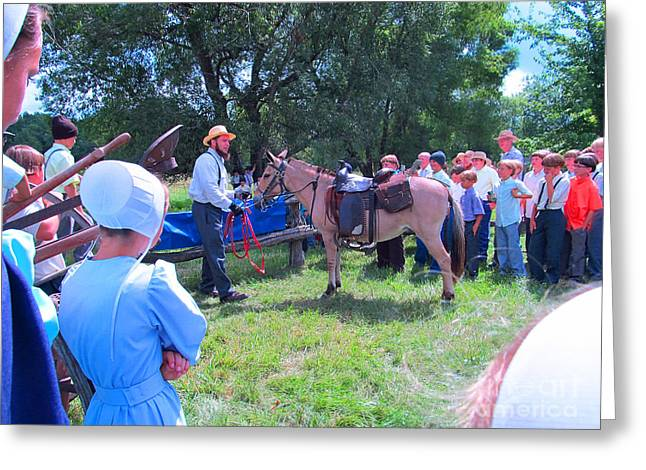 Mennonite Community Greeting Cards - Horse Show Greeting Card by Tina M Wenger