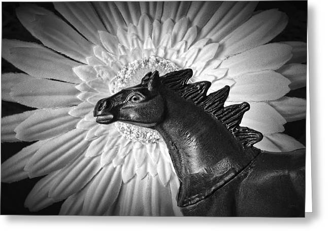 Visionaries Designs Greeting Cards - Horse Startled By A Daisy Greeting Card by Jeff  Gettis