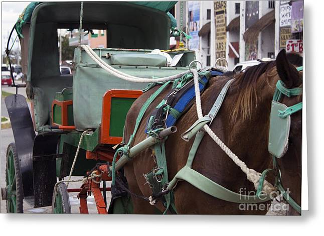 Buggy Whip Greeting Cards - Horse Taxi Greeting Card by Steven Parker