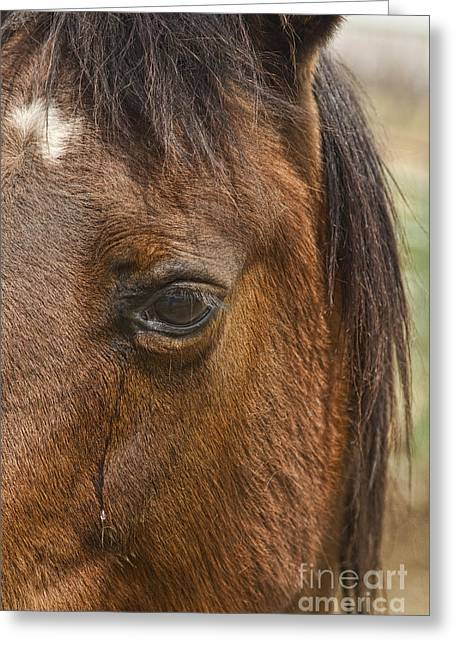 """james Insogna"" Greeting Cards - Horse Tear Greeting Card by James BO  Insogna"