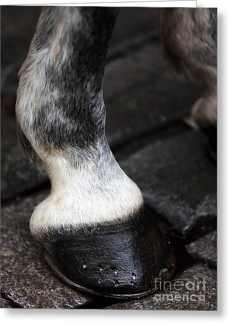 Spotted Horse Greeting Cards - Horse Toe Greeting Card by John Rizzuto
