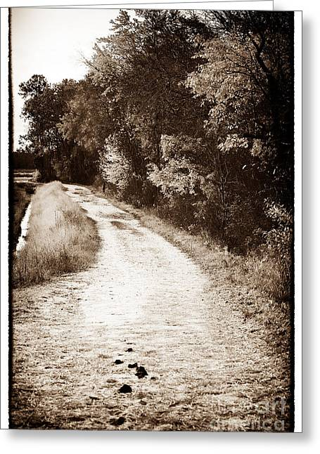 Horse Images Greeting Cards - Horse Trail Greeting Card by John Rizzuto