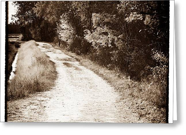 Horse Trail Greeting Card by John Rizzuto