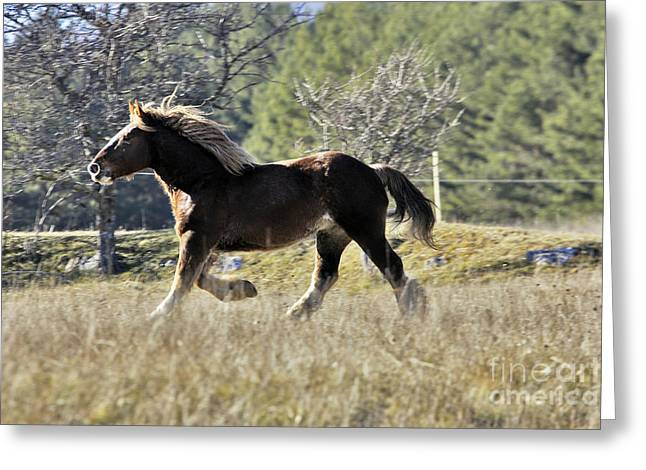 Horse Breed Greeting Cards - Horse, Trait Breton Greeting Card by M. Watson