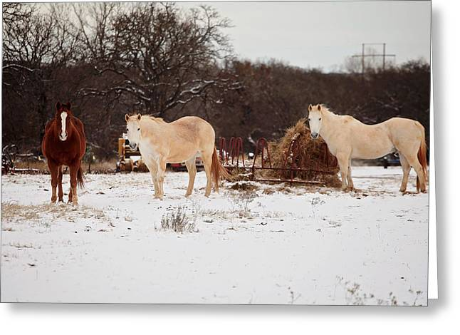 Roping Horse Greeting Cards - Horse trio in the snow Greeting Card by Toni Hopper