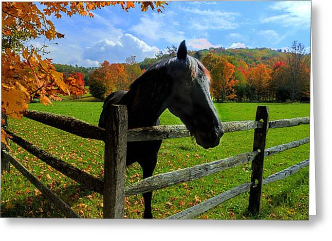Horse under tree by fence Greeting Card by Dan Friend