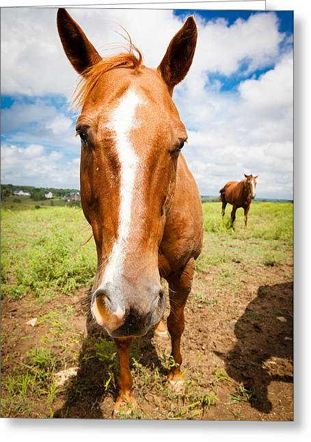 Horse Up Close Greeting Card by Alexey Stiop