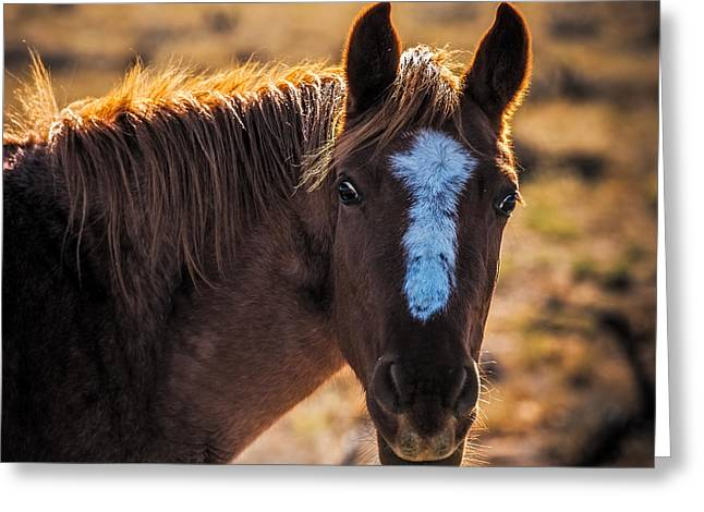 Horses With Nature Greeting Cards - Horse with backlight Greeting Card by Paul Freidlund