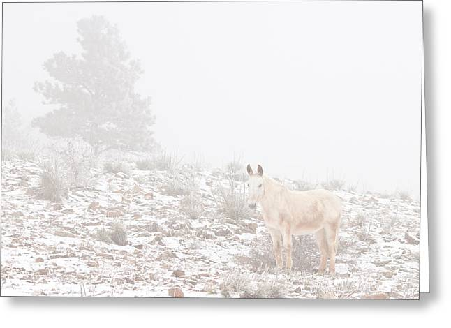 Rocky Mountain Foothills Greeting Cards - Horse with Winter Season Snow and Fog Greeting Card by James BO  Insogna