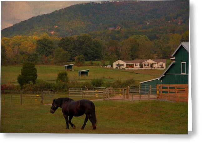 Gatlinburg Tennessee Greeting Cards - Horseback Riding In Gatlinburg Greeting Card by Dan Sproul